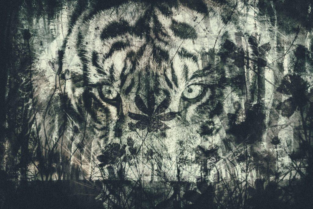 Tiger-Edit_TP_V